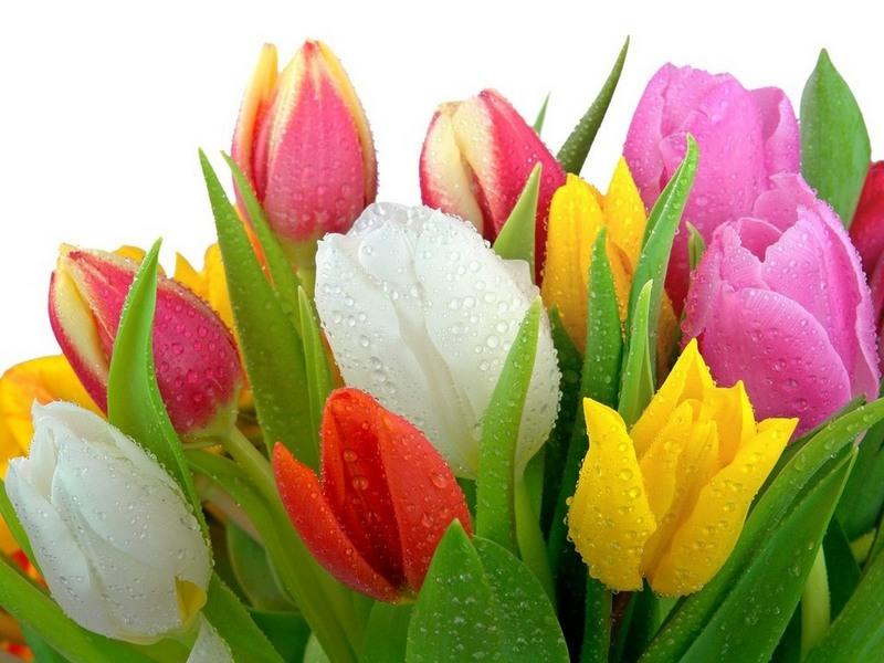 Красивые букеты тюльпанов открытки