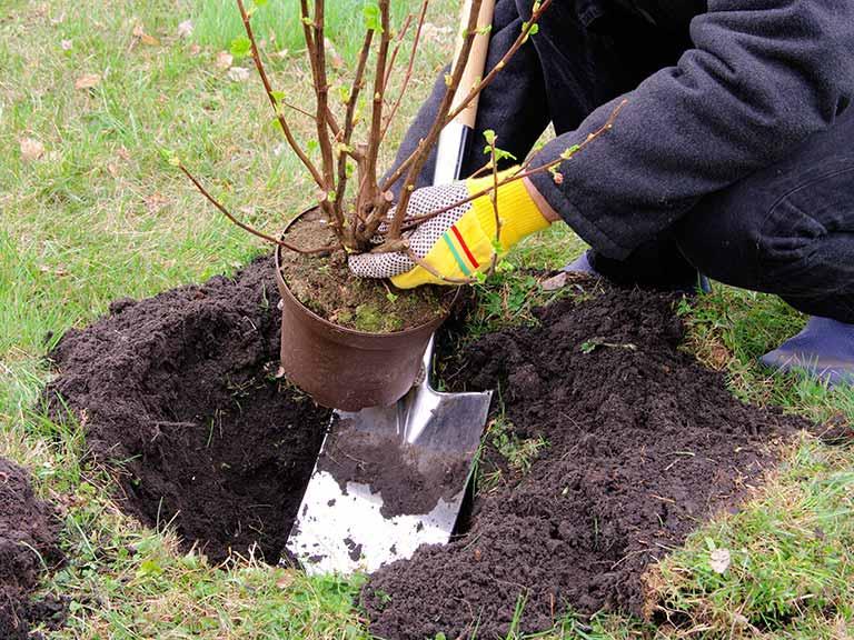Когда и как сажать деревья осенью или  199
