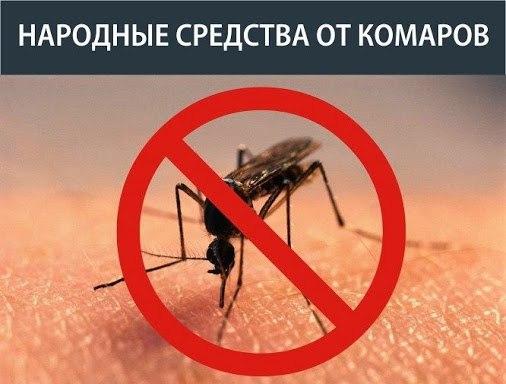 Защита от комаров на природе своими руками