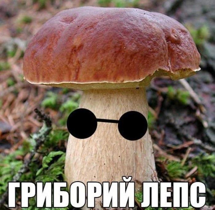 Спокойной, прикольные картинки грибы
