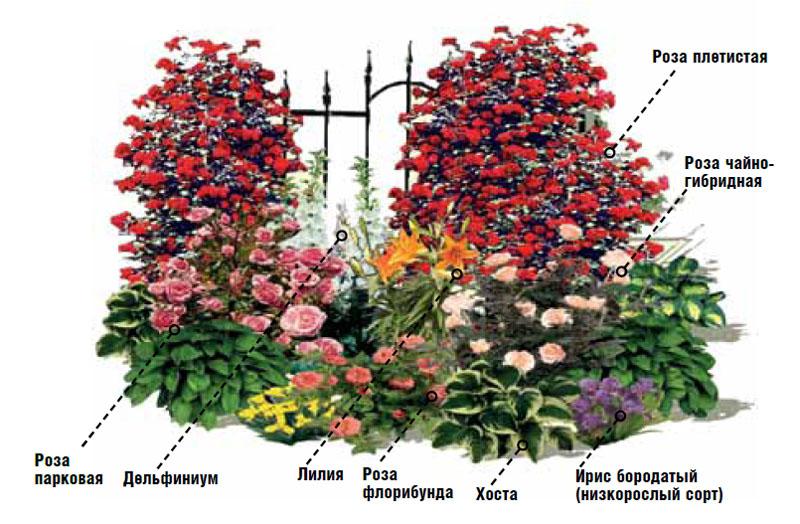 какие цветы можно посадить с розами фото фотка