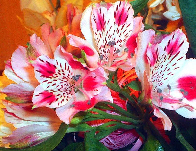 Цветы похожие на лилии только маленькие 94