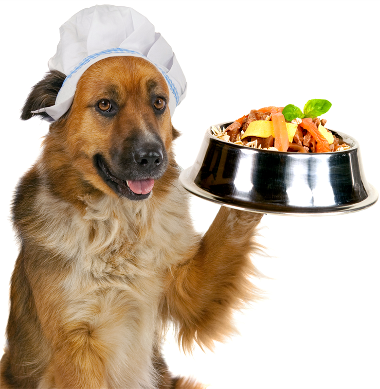 smackey dog foods inc by ljubomir Smackey dog foods, inc has been a very successful dog food manufacturer for the past few years, but along with their success, they have many issues surrounding their management styles and accounting techniques.