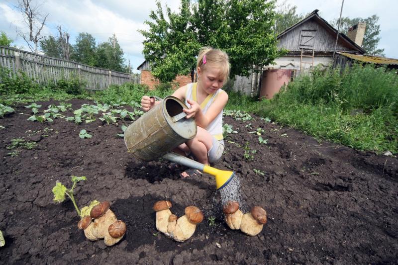 Выращивание грибов на садовом участке для новичков 89