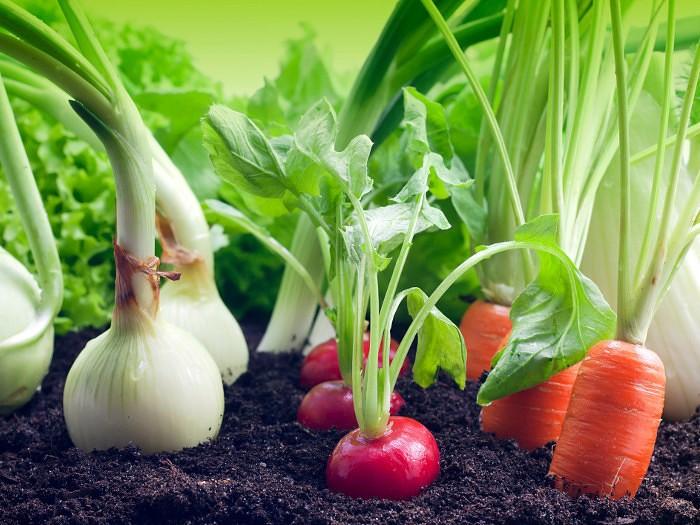 Овощи короткого и длинного светового дня, Интернет магазин семян 22