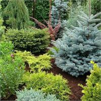 Как правильно выбрать место посадки и грунт для хвойных растений