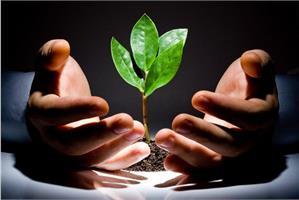 Как проводить закаливание рассады овощных и цветочных культур?