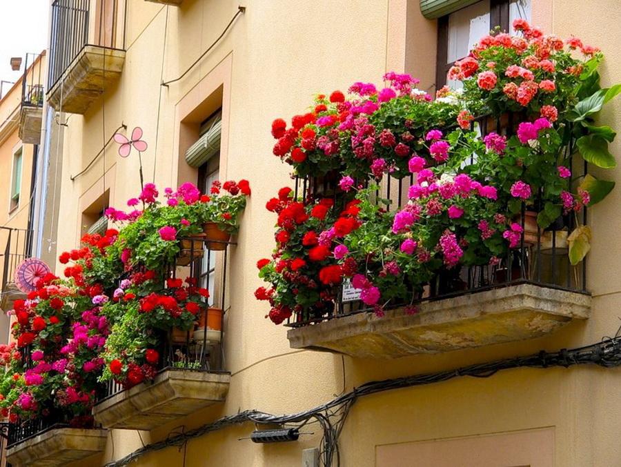 Украсить балкон  цветы