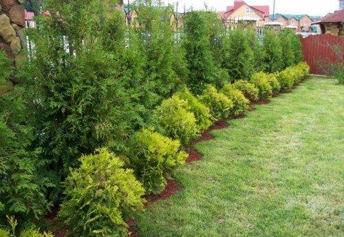 Какие кустарники и деревья можно сажать в августе 32