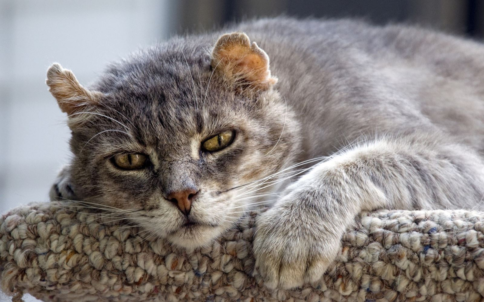 про кошек с картинками мари комбс лучшие
