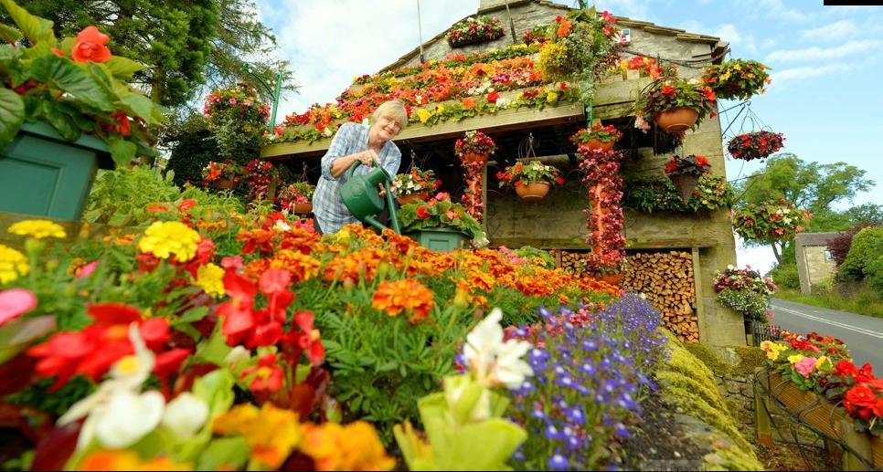 фото летние работы в саду