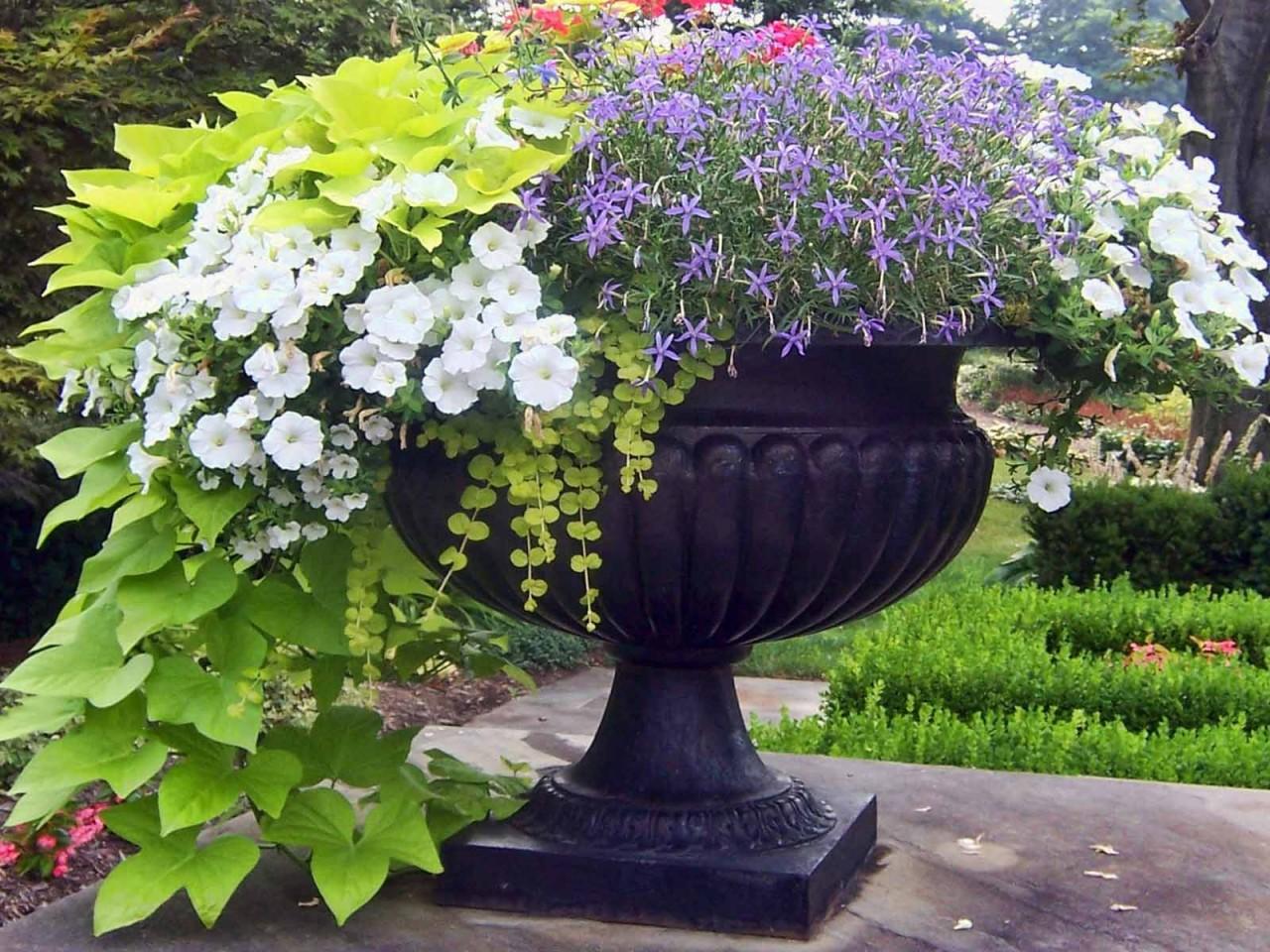 Какие цветы посадить в вазоны на даче фото