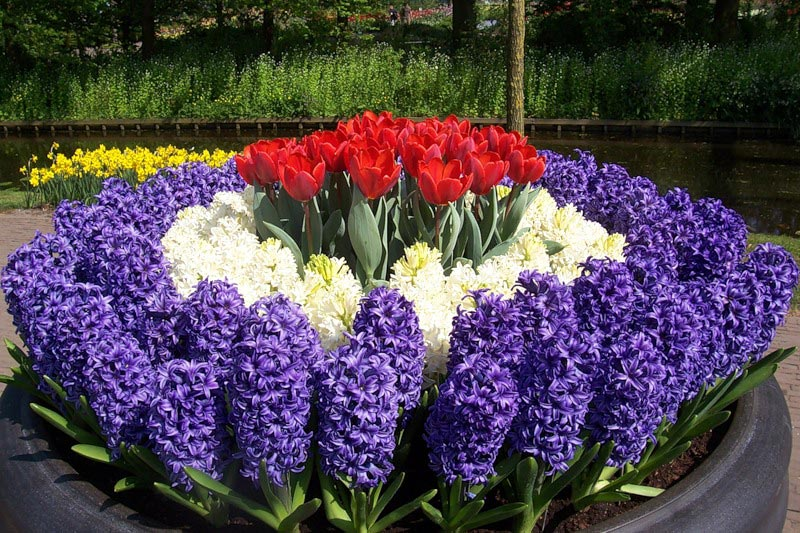Цветы для сада