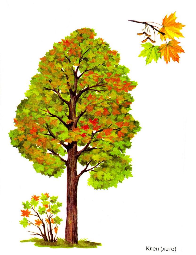Роз юбилеем, картинки на тему деревья для детского сада