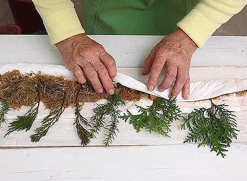 Выращивание туи из черенка домашних условиях 86