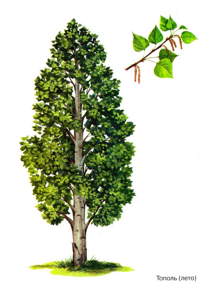 С деревьев знакомство видами