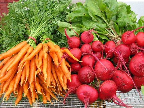 Чтобы свекла и морковь выросли сахарными (советы огородникам)