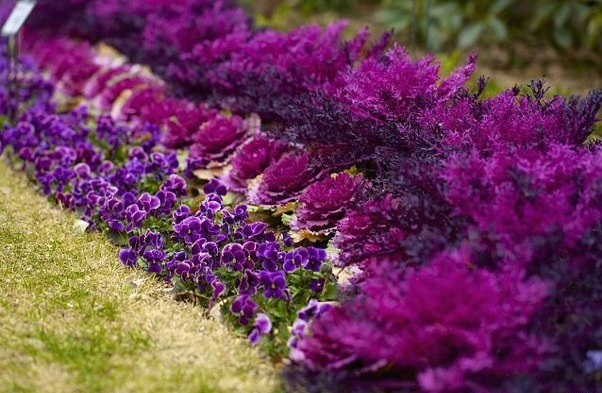 фото цветочно-декоративных растений и их описание