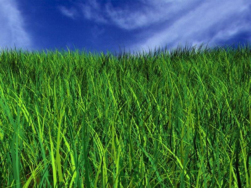 Фото рисуем траву