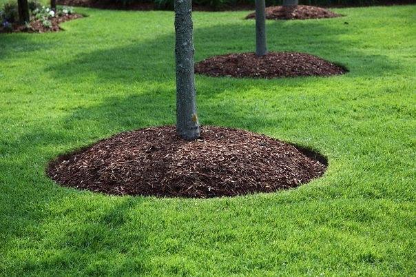 Картинки по запросу Как правильно содержать почву под плодовыми деревьями