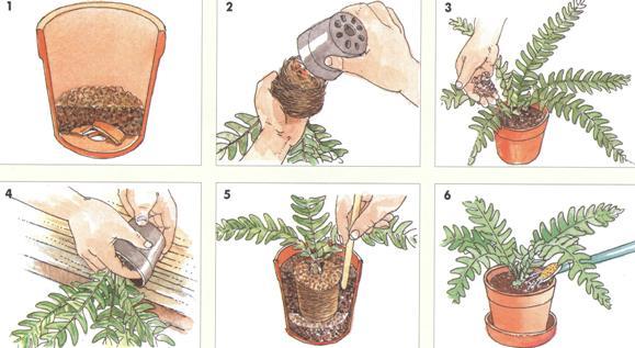 Инструкция По Выращиванию Домашних Цветов