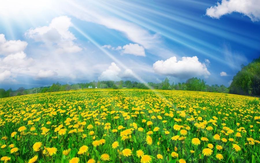 летние рекомендации по уходу за садом